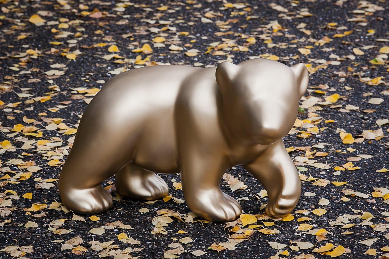 AXIS71 – BABY BEAR